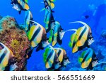 a flock of fish at the bottom... | Shutterstock . vector #566551669