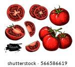 tomato vector drawing set.... | Shutterstock .eps vector #566586619