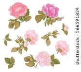 rose flowers. stock line vector ...   Shutterstock .eps vector #566591824