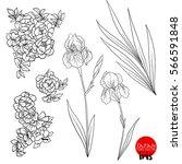iris and wild rose flowers....   Shutterstock .eps vector #566591848