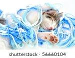 Stock photo funny kitten sleeping 56660104