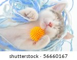 Stock photo funny kitten sleeping 56660167
