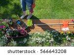 woman with gardening tools... | Shutterstock . vector #566643208