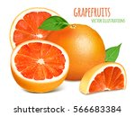 grapefruits with leaves. vector ... | Shutterstock .eps vector #566683384