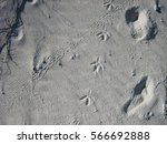 Multiple Traces In The Sand