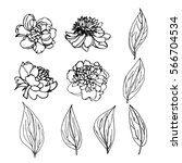 a hand drawn set of peony flowers and leaves; chinese roses perfect for wedding invitations and greeting cards