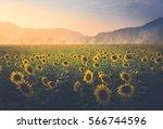 Field Of Sunflower It's Look...