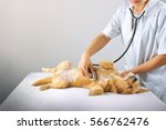 Stock photo female vet with dog 566762476