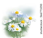 chamomile   herbs   matricaria... | Shutterstock .eps vector #566771050