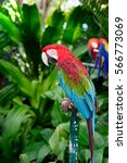 colorful macaw parrot standing... | Shutterstock . vector #566773069