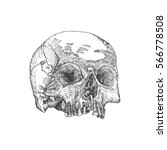 anatomic skull  weathered and... | Shutterstock .eps vector #566778508