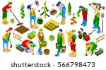 isometric barley farmer people... | Shutterstock .eps vector #566798473