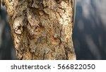 tree and vinyl black   Shutterstock . vector #566822050