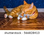 Stock photo tabby cat plays with toy 566828413