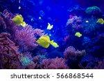 beautiful underwater world....   Shutterstock . vector #566868544