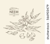 background with neem  leaves... | Shutterstock .eps vector #566903479