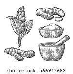 turmeric root  powder and... | Shutterstock .eps vector #566912683