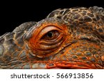 Close Up Eyeball Of Dragon Head ...