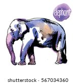 indian elephant. drawing by... | Shutterstock .eps vector #567034360