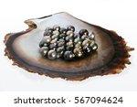 fiji black lip oyster shell... | Shutterstock . vector #567094624