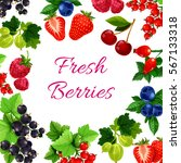 berry fruits poster. blueberry... | Shutterstock .eps vector #567133318