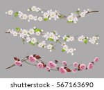 tree branch  spring flowers 3d... | Shutterstock .eps vector #567163690