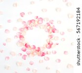 Stock photo frame made of pink roses petals on white background flat lay top view valentine s background 567192184