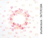 Frame Made Of Pink Roses Petal...