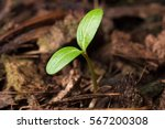 Small photo of Seed growing and Planting, Newborn or Afforest concept