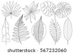 vector set of tropical palm... | Shutterstock .eps vector #567232060