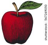 Apple   Vintage Engraved Vector ...
