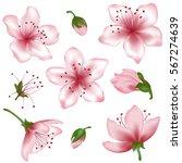 vector spring blossom   pink... | Shutterstock .eps vector #567274639