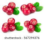 cranberries collection isolated ... | Shutterstock . vector #567294376