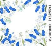 blue muscari frame on white... | Shutterstock .eps vector #567295066