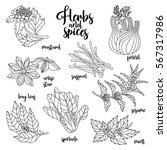 spices and herbs set to prepare ... | Shutterstock . vector #567317986