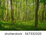 forest trees. nature green wood ... | Shutterstock . vector #567332320
