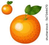 orange fruit. cartoon vector... | Shutterstock .eps vector #567344470