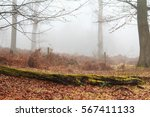 english woodland on a foggy...   Shutterstock . vector #567411133