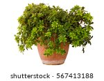 South Potted Plant Isolated