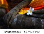 Plumeria Rubra Flower On...