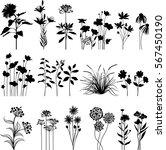 botany set   Shutterstock .eps vector #567450190