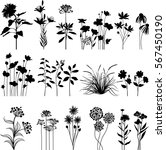 Stock vector botany set 567450190