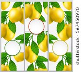lemon three banner set. lemon... | Shutterstock .eps vector #567450970