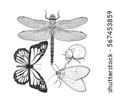 set of insects like dragonfly ... | Shutterstock .eps vector #567453859