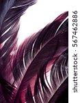 purple feathers fragment... | Shutterstock . vector #567462886