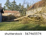 Storm Cyclone Tree Elm Orme...