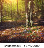 Autumn Forest With Flowers At...