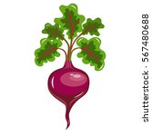 flat icon beet with leaves.... | Shutterstock .eps vector #567480688