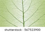 leaf with ribs | Shutterstock .eps vector #567523900