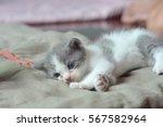 Stock photo cute kitten lie down on blanket 567582964